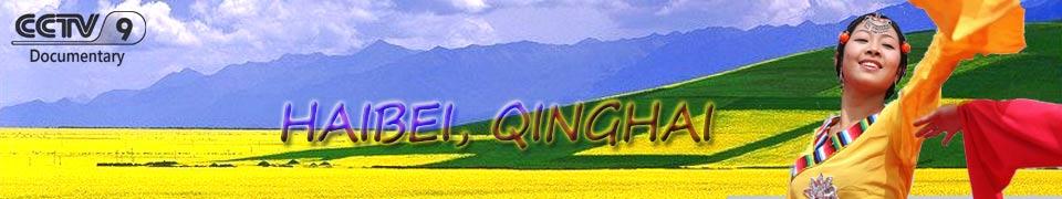 haibei qinghai cctv wcetv rc media
